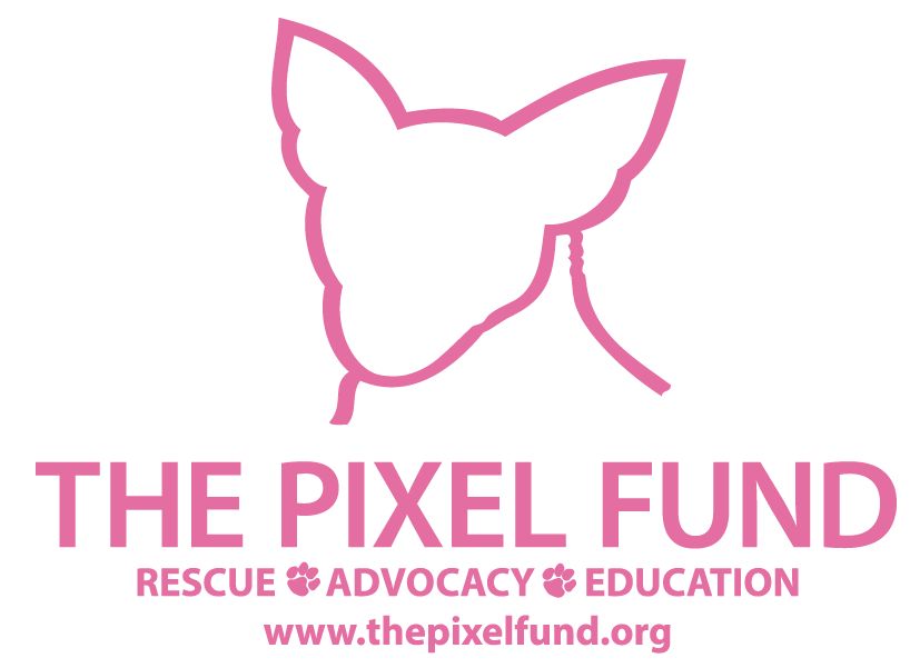 The Pixel Fund
